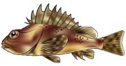 BPI_Hyperion_PS_Scorpionfish